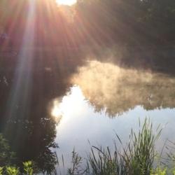 Sun Rays, Mist Rising, CHRONOLOG, Ann Grasso Fine Art