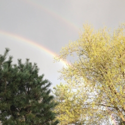 Double Rainbow Celebrates Spring, CHRONOLOG, Ann Grasso Fine Art