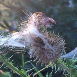 White Feathers, Ann Grasso Fine Art