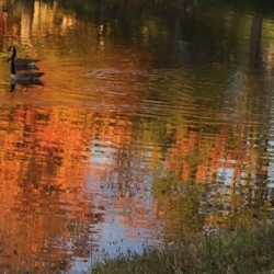 Geese in Reflected Color, CHRONOLOG, Ann Grasso Fine Art