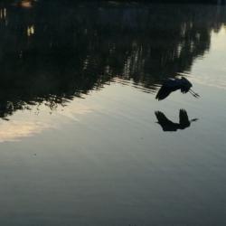 Rorschach Heron, Ann Grasso Fine Art