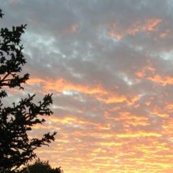 Mottled Sunrise, Ann Grasso Fine Art