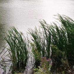 Wind Races on Water, CHRONOLOG, Ann Grasso Fine Art