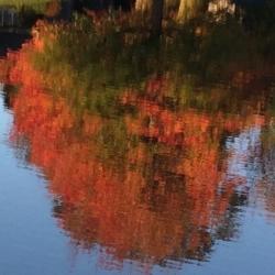 Fall Tree Reflection, Ann Grasso Fine Art