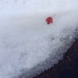 Red Leaf in Snow, Ann Grasso Fine Art