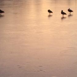 Ice Pond, Ann Grasso Fine Art