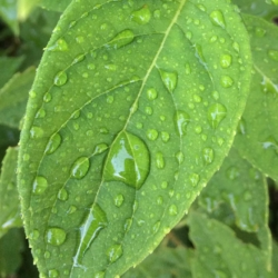 Water Drops, Ann Grasso Fine Art
