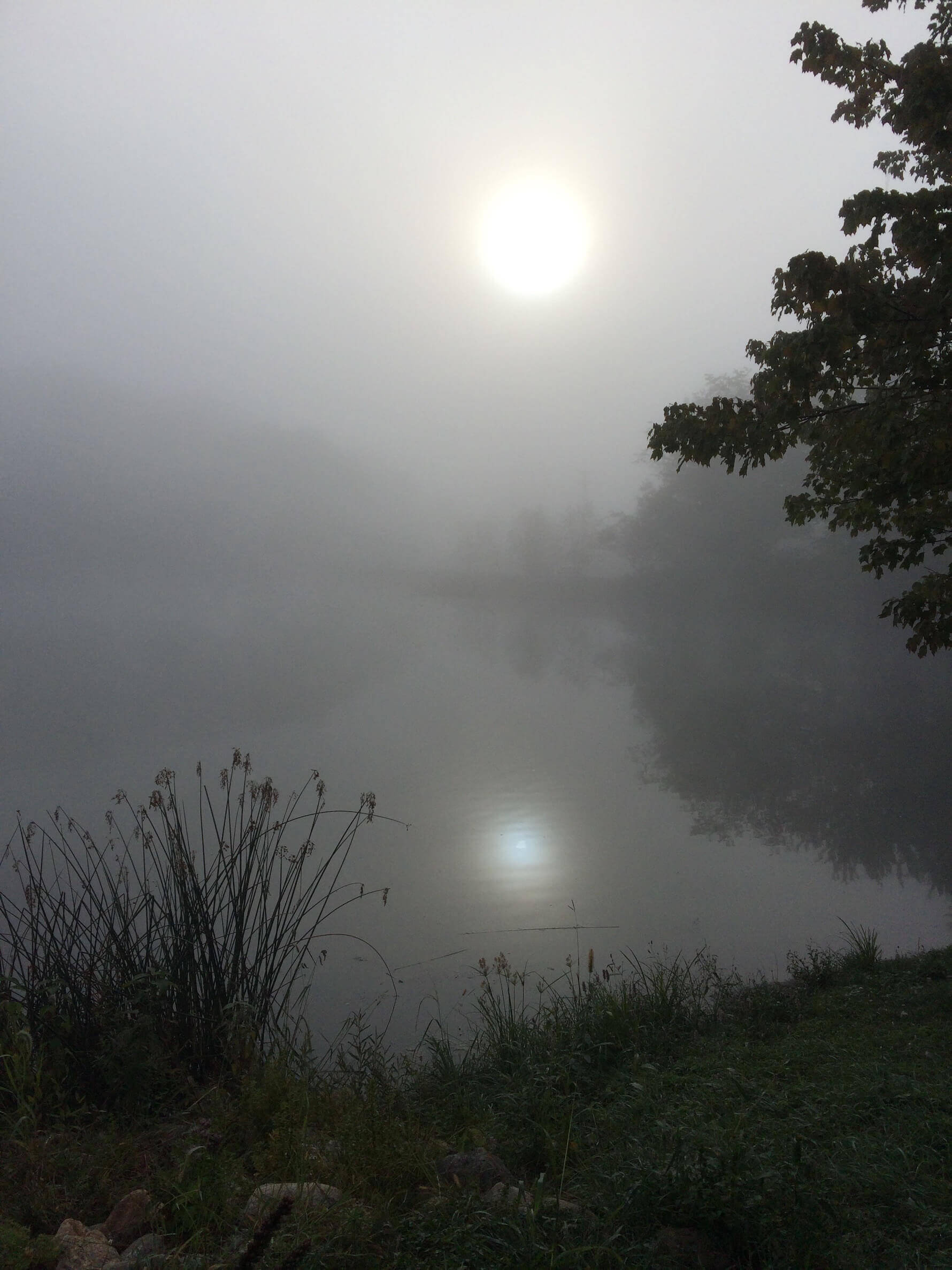 reflections and fog photos for sale
